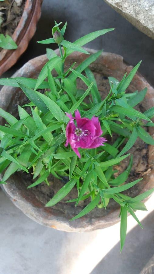 Mooie bloem en bloesem en bladeren royalty-vrije stock foto's