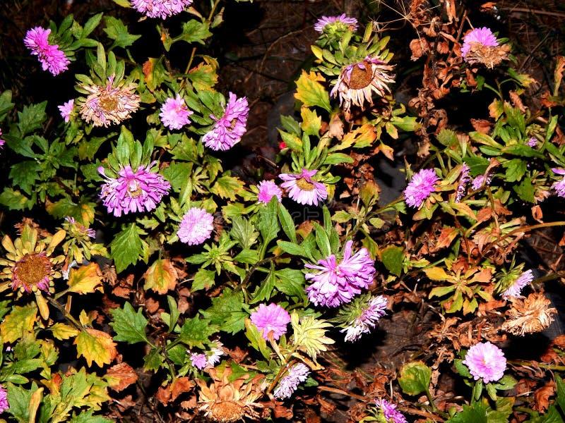 Mooie bloem in Gheorgheni royalty-vrije stock afbeelding