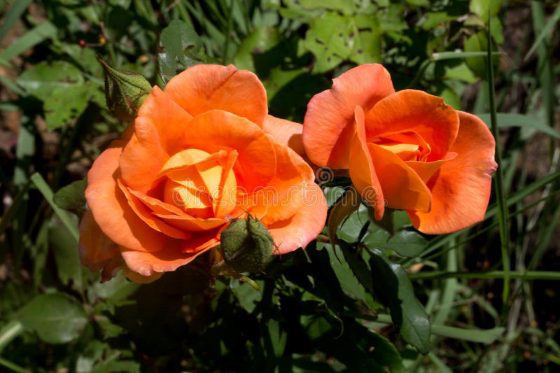 Mooie bloem in het Bos stock afbeelding