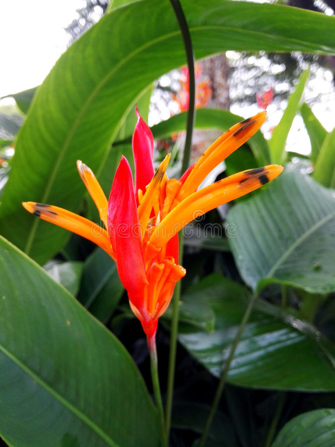Mooie bloem met close-upfoto royalty-vrije stock foto