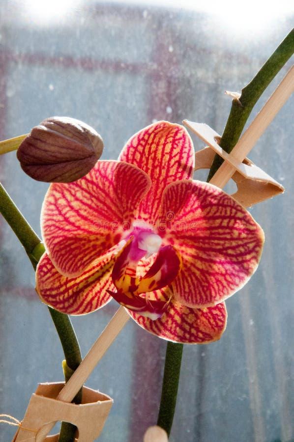 Mooie bloem op het venster stock afbeeldingen