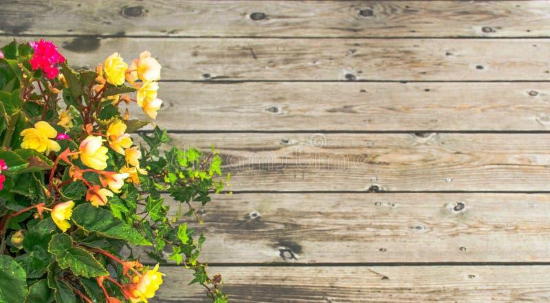 Mooie bloem over Houten achtergrond royalty-vrije stock fotografie