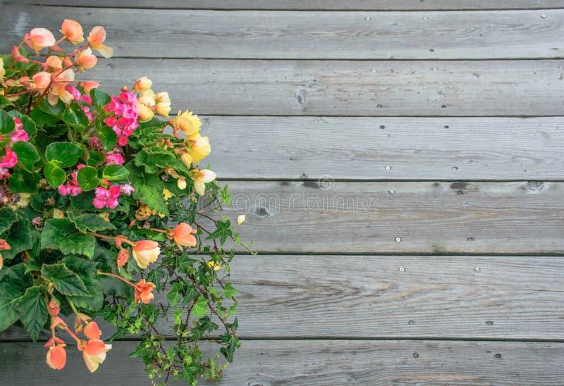 Mooie bloem over Houten achtergrond royalty-vrije stock afbeelding