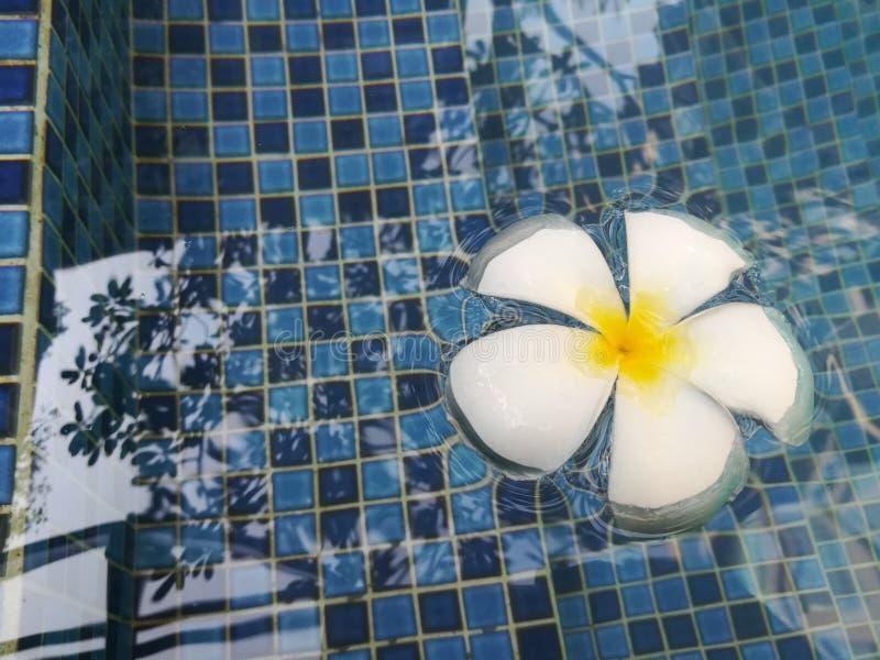 Mooie bloem in pool royalty-vrije stock afbeeldingen