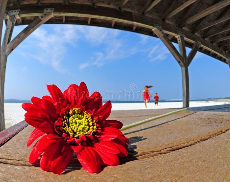 Mooie bloem in strandschuilplaats royalty-vrije stock fotografie