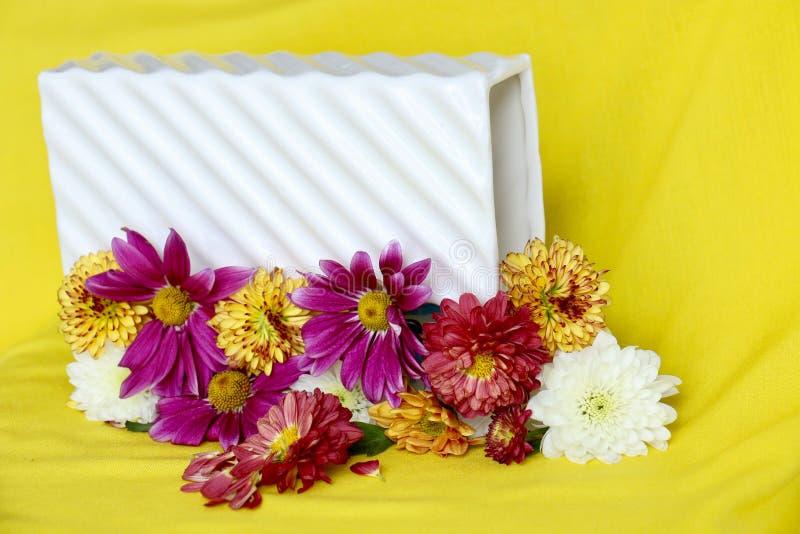 Mooie bloem in tuin royalty-vrije stock fotografie