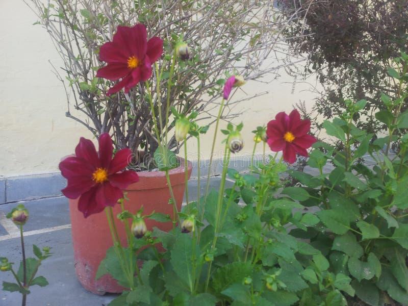 Mooie bloem in tuin stock afbeelding