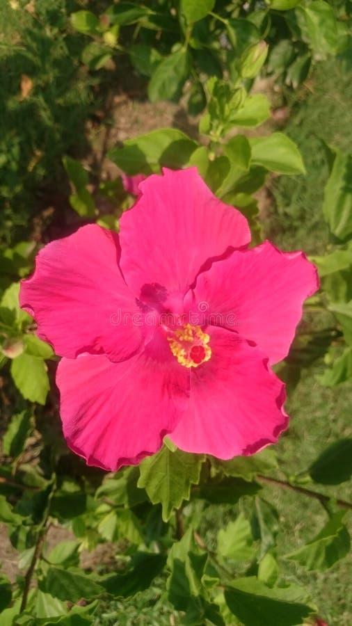 Mooie bloem 2 voor achtergrondbehang royalty-vrije stock fotografie