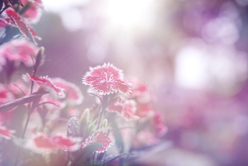 Mooie bloemachtergrond royalty-vrije stock fotografie