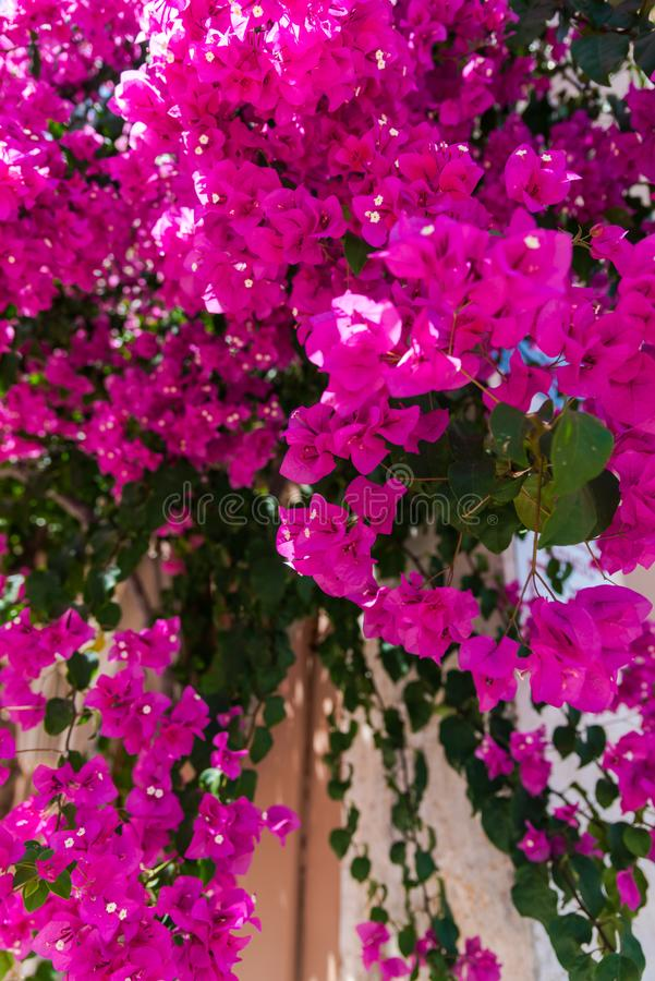 Mooie bloemen stock foto's
