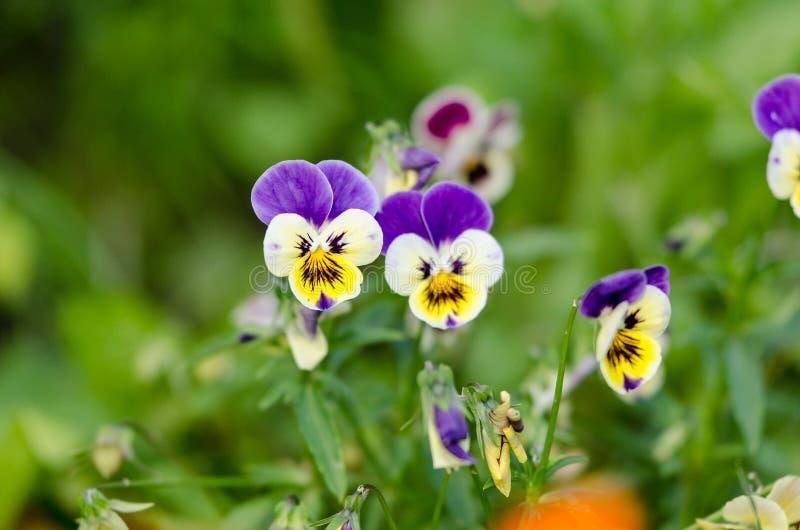 Mooie bloemen royalty-vrije stock foto