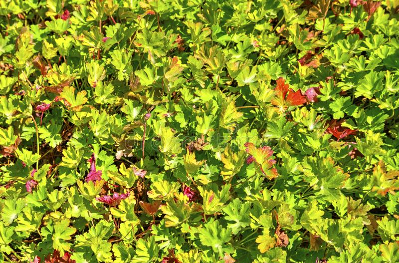Mooie bloemen? achtergrond als achtergrond met kleurrijke bloemen stock afbeelding