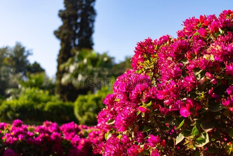 Mooie Bloemen bij Cyber-Park in Marrakech Marokko royalty-vrije stock afbeelding
