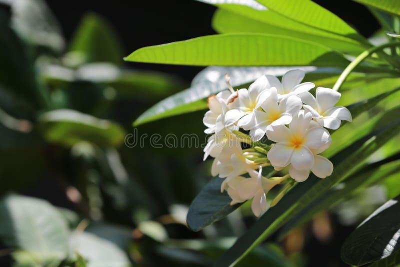 Mooie bloemen bij tropische toevlucht op zonnige dag stock afbeelding