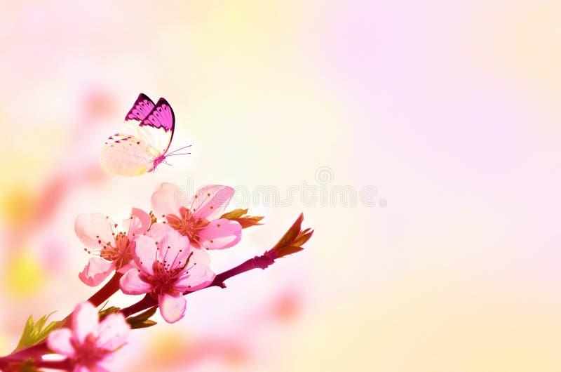 Mooie bloemen de lente abstracte achtergrond van aard en vlinder Tak van tot bloei komende perzik op lichtrose hemelachtergrond v royalty-vrije stock afbeeldingen