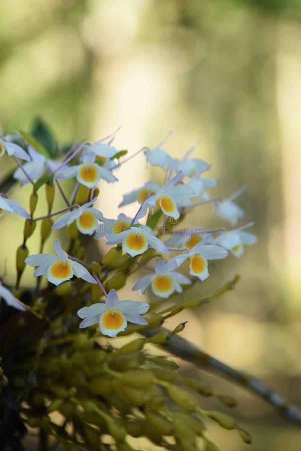 Mooie bloemen in de tuin royalty-vrije stock afbeeldingen