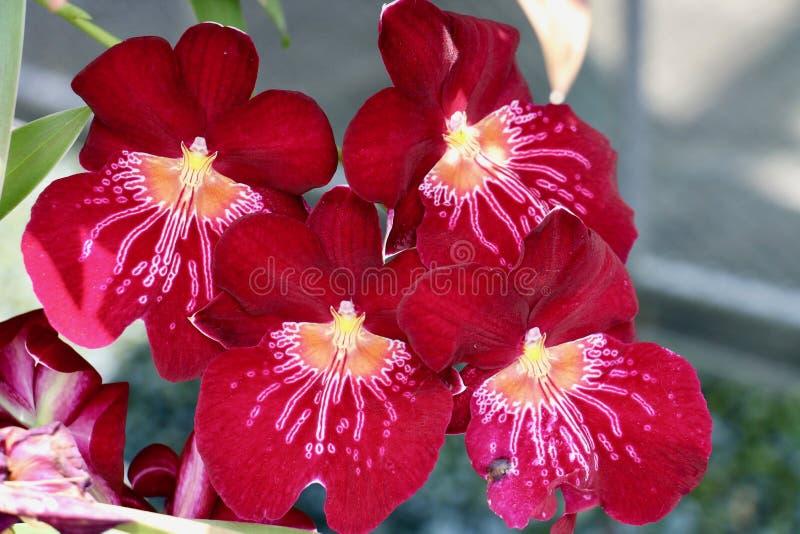 Mooie bloemen in de tuin royalty-vrije stock foto's