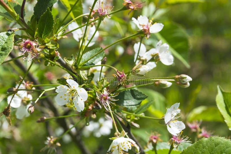 Mooie bloemen in de tuin met de lente bokeh achtergrond, aard openlucht royalty-vrije stock afbeelding