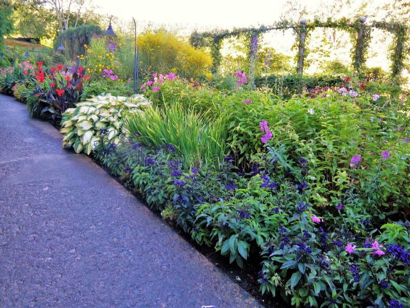 Mooie bloemen die in een openluchttuin bloeien royalty-vrije stock fotografie