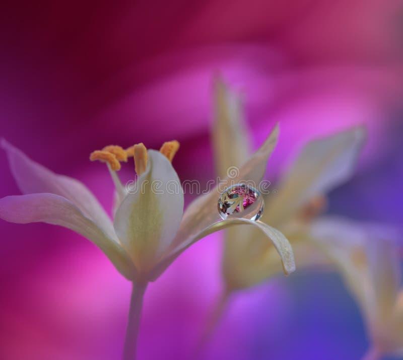 Mooie bloemen die in het water, artistiek concept worden weerspiegeld De rustige abstracte fotografie van de close-upkunst Bloeme stock foto