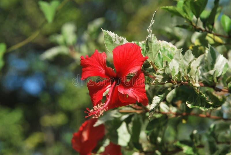 Mooie bloemen, die op een plattelandsgebied van †‹â€ ‹de Provincie van Panama worden gevangen royalty-vrije stock foto's