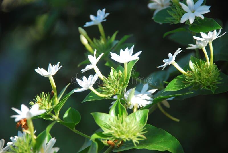 Mooie bloemen, die op een plattelandsgebied van †‹â€ ‹de Provincie van Panama worden gevangen royalty-vrije stock afbeelding