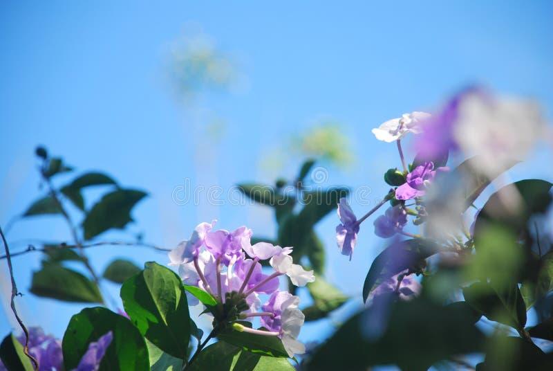 Mooie bloemen, die op een plattelandsgebied van †‹â€ ‹de Provincie van Panama worden gevangen stock afbeeldingen