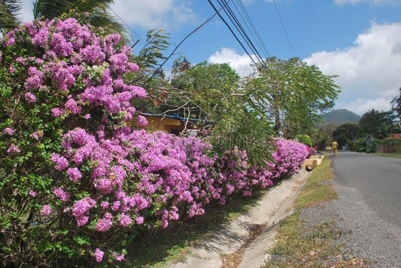 Mooie bloemen, die op een plattelandsgebied van †‹â€ ‹de Provincie van Panama worden gevangen valle DE Antà ³ n royalty-vrije stock afbeeldingen