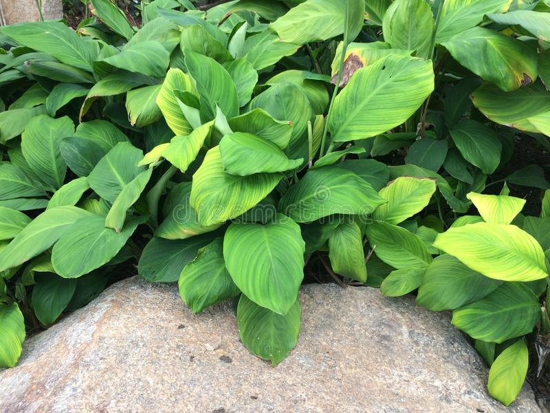 Mooie bloemen en groene bladeren royalty-vrije stock foto