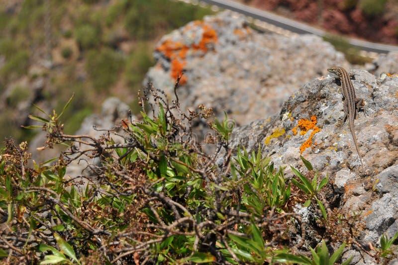 Mooie bloemen en hagedis op de steen stock foto