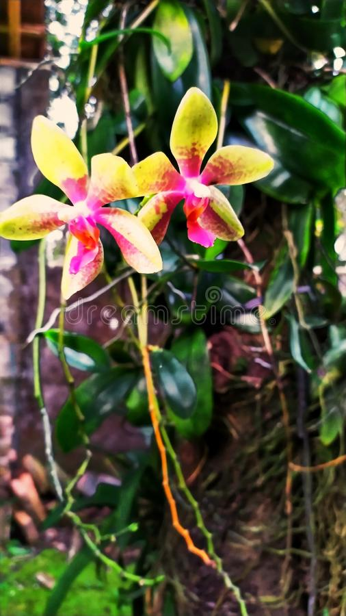 Mooie bloemen en installaties bij grandma& x27; s binnenplaatshuis 8 royalty-vrije stock afbeeldingen