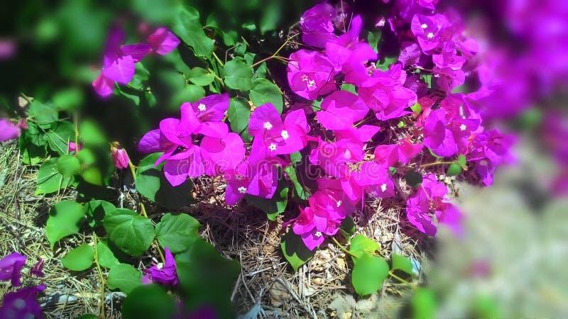 Mooie bloemen en installaties van het Eiland Cyprus stock fotografie
