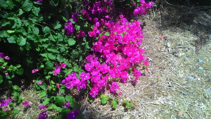 Mooie bloemen en installaties van het Eiland Cyprus royalty-vrije stock afbeeldingen