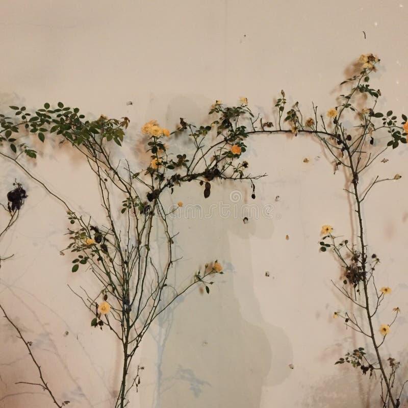 Mooie bloemen en natuurlijke installaties De bloemenachtergrond van de bloem Garden royalty-vrije stock foto