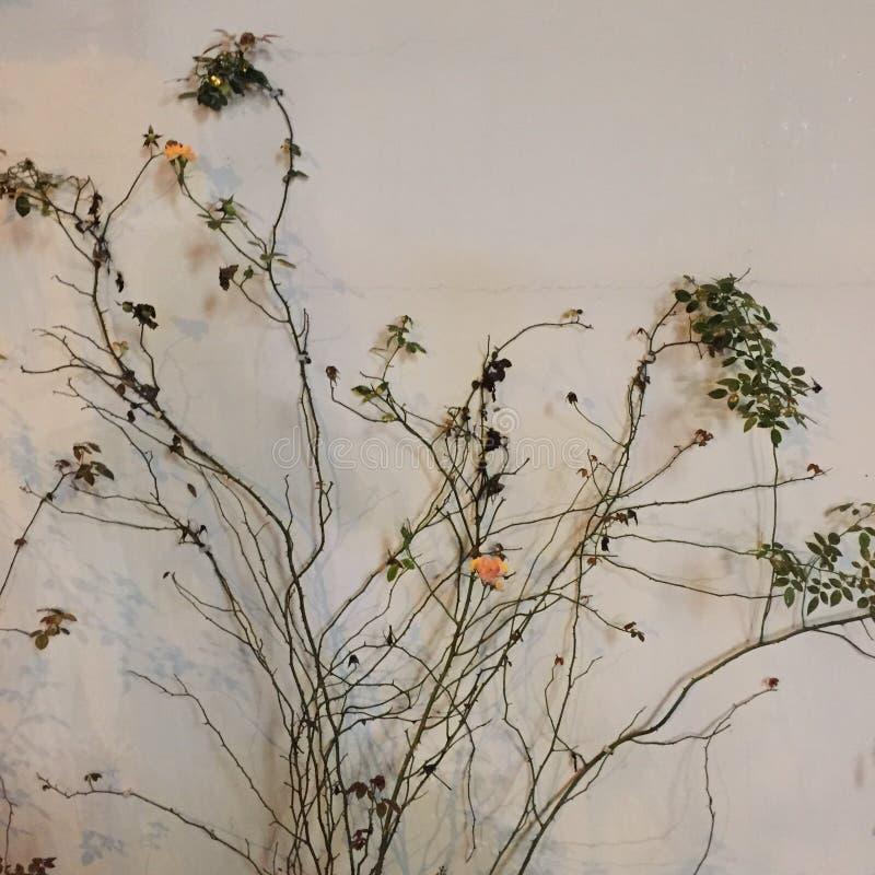 Mooie bloemen en natuurlijke installaties De bloemenachtergrond van de bloem Garden royalty-vrije stock afbeeldingen