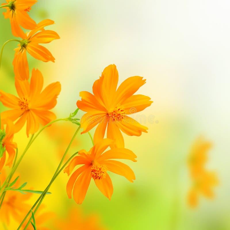 Mooie Bloemen gele Grens. Bloemenontwerp stock fotografie