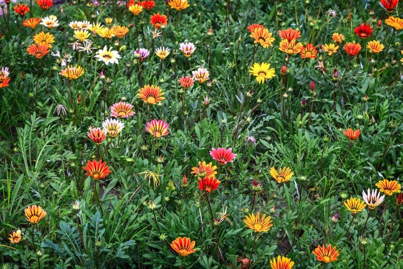 Mooie bloemen op een bloembed in de tuin stock afbeelding