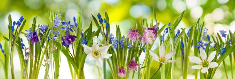 Mooie bloemen op een groene achtergrond stock fotografie