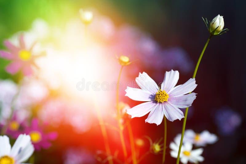 Mooie bloemen op magische tuinachtergrond gestemd stock foto