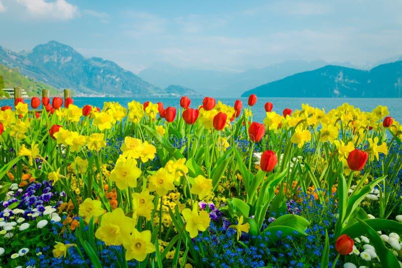 Mooie bloemen over meer Luzerne en bergenachtergrond in Zwitserland royalty-vrije stock foto