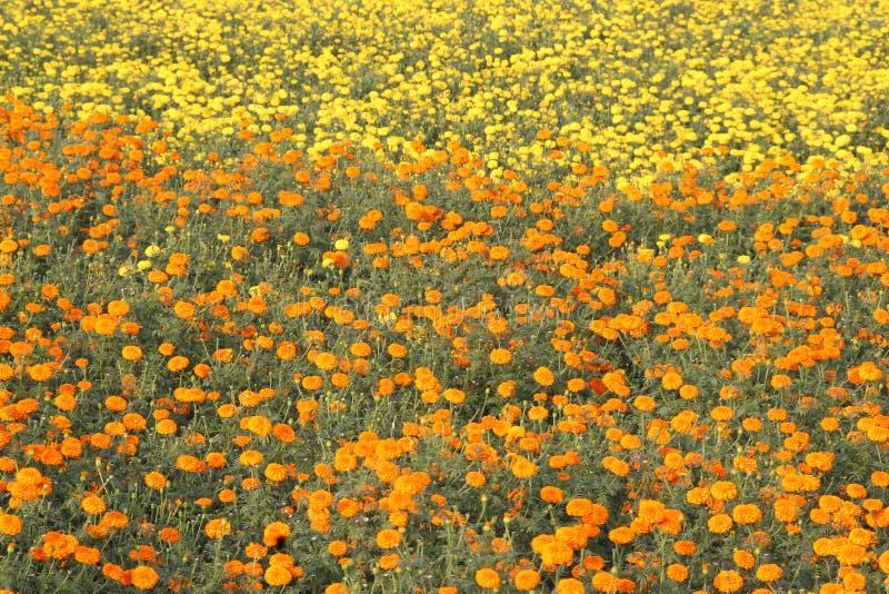 Mooie bloemen twee kleuren stock foto