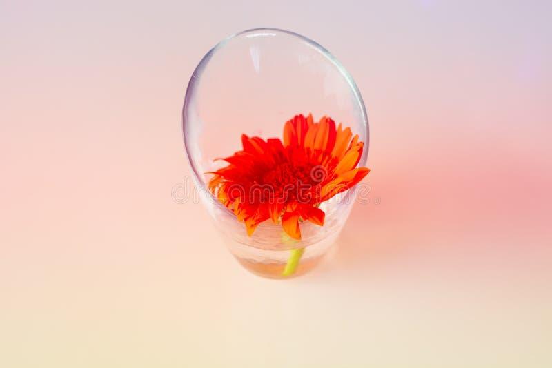 Mooie bloemen in vaas royalty-vrije stock afbeelding