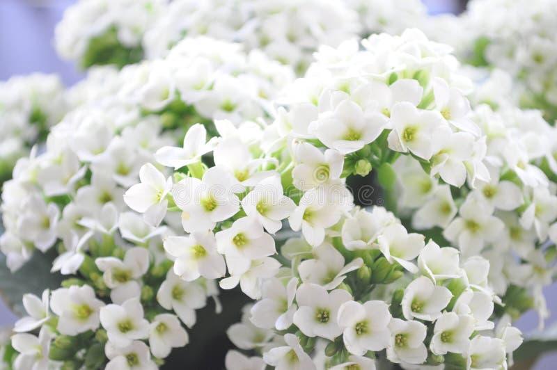 Mooie Bloemen van de Lente stock foto's