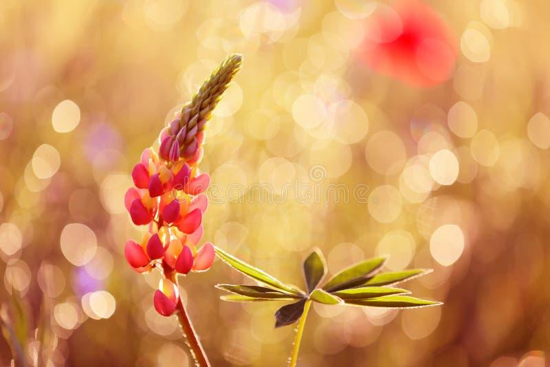Mooie bloemen van de tuin in aantrekkelijke de zomerkleuren stock foto's