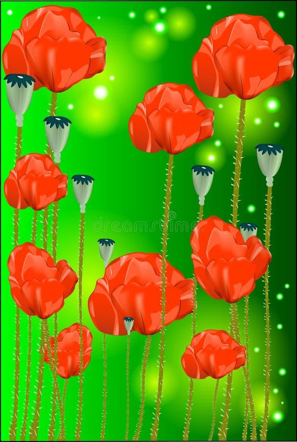 Mooie bloemen van een papaver stock afbeelding