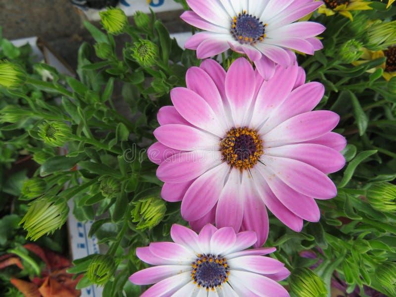 Mooie bloemen van intense kleuren en van grote schoonheid stock foto