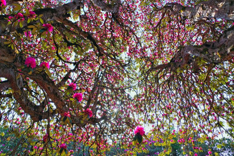 Mooie bloemen van Nepal royalty-vrije stock afbeeldingen