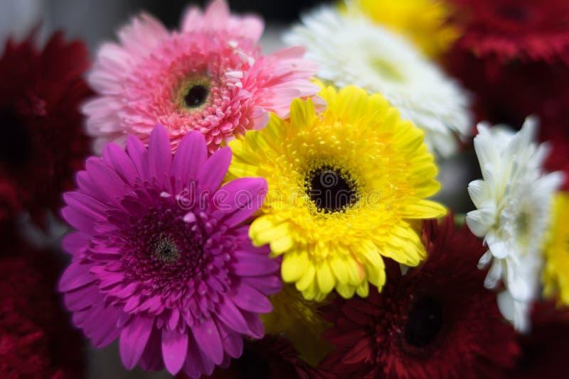 Mooie bloemen van verschillende kleuren stock afbeeldingen