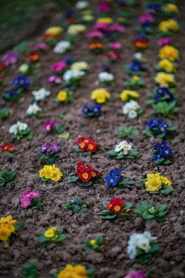 Mooie Bloemen in Verschillende Kleuren, kleine tuin in de stad royalty-vrije stock foto's
