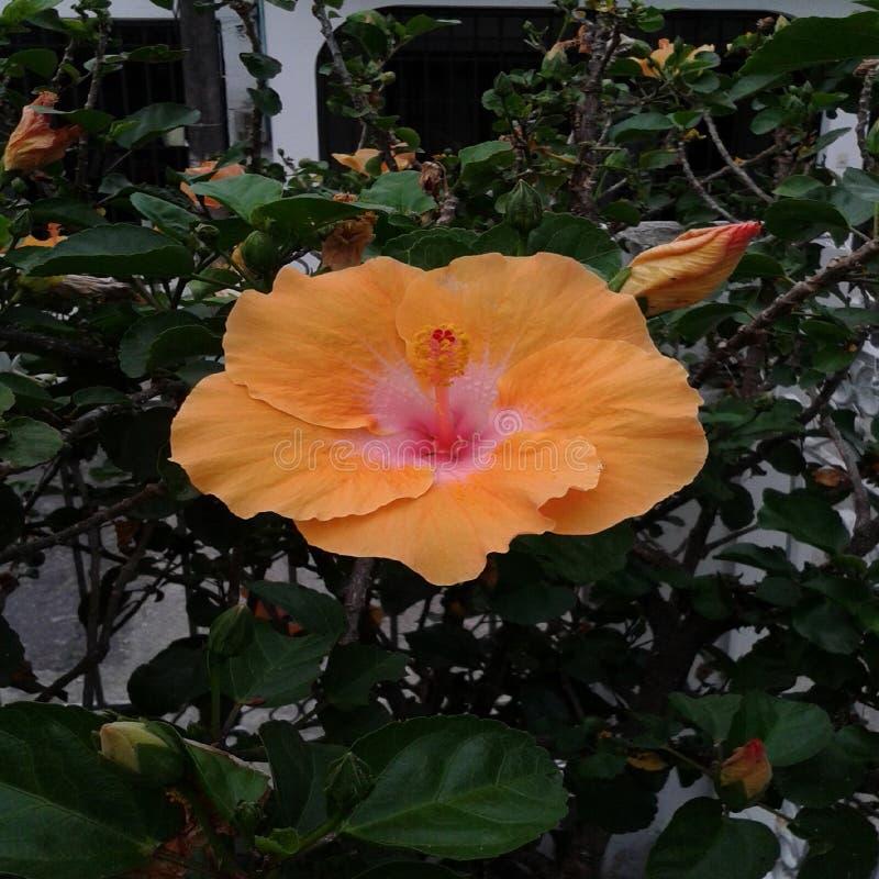 Mooie bloemen voor de tuin stock afbeeldingen
